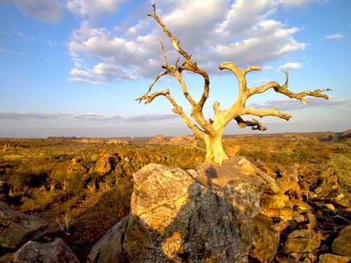 پارک-ملی-افریقا