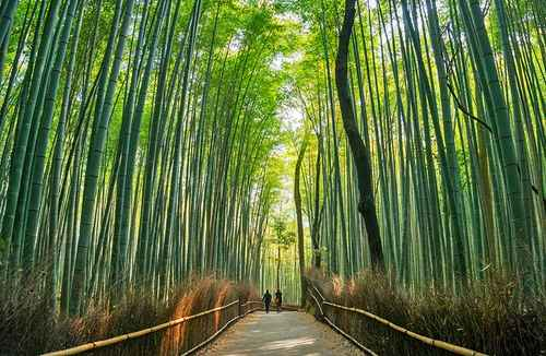   japan attractions kyoto
